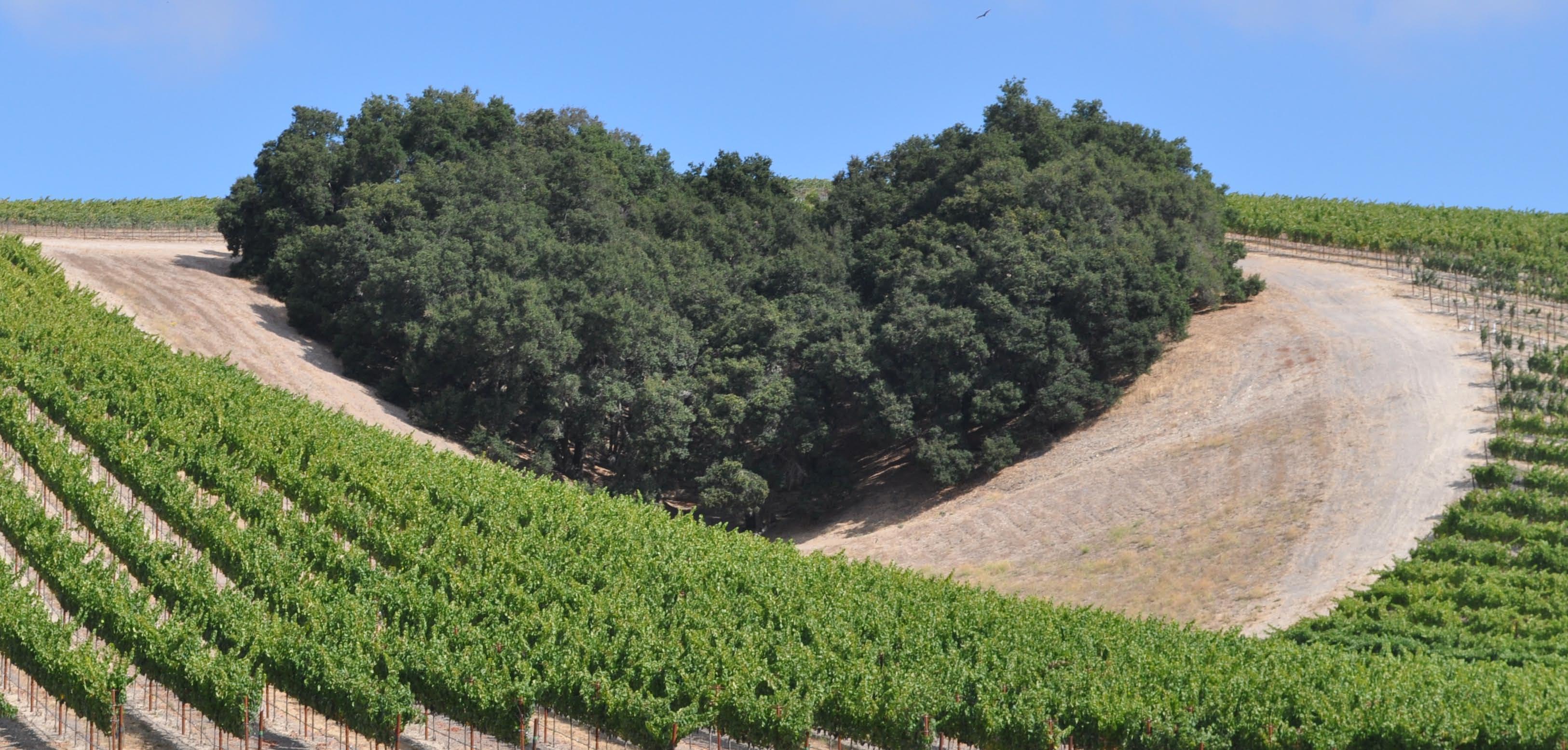 niner winery Gallery